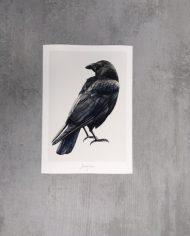 Art Print Crow