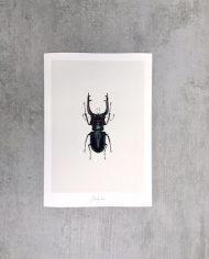 Art Print Beetle