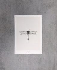 Art Print Dragonfly