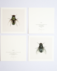 Art Cards Insect