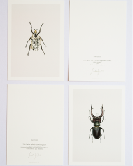 Art Cards beetle
