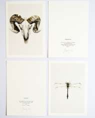 Art Cards Dragonfly