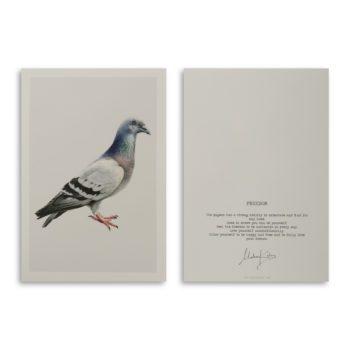 Freedom Pigeon Artcard