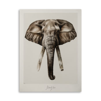 Bond elephant artprint